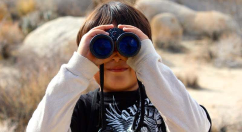 Observación de aves, Birding